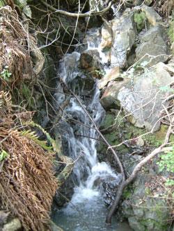 waterfallwalkercreek
