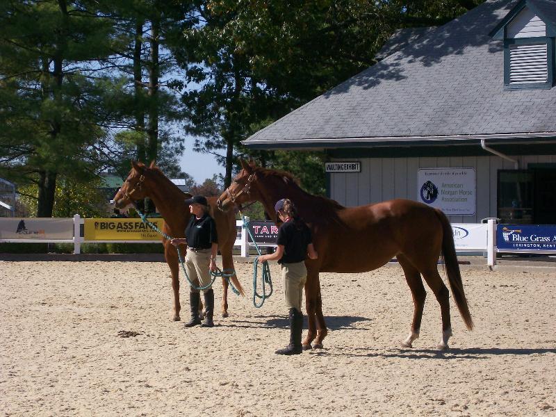 2 demo horses
