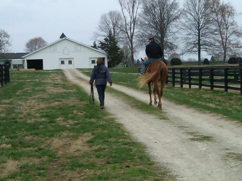 Heading back to barn