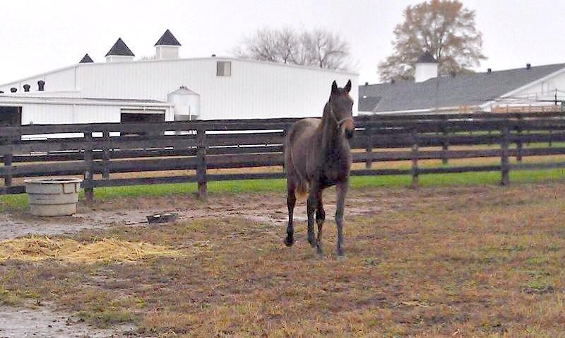 Oct2011 Jim in paddock