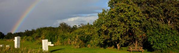 honey farm rainbow