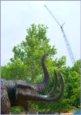 Mastodon and crane