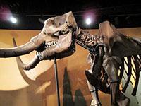 Fred the Mastodon