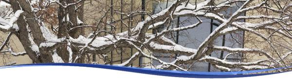 Winter header branches