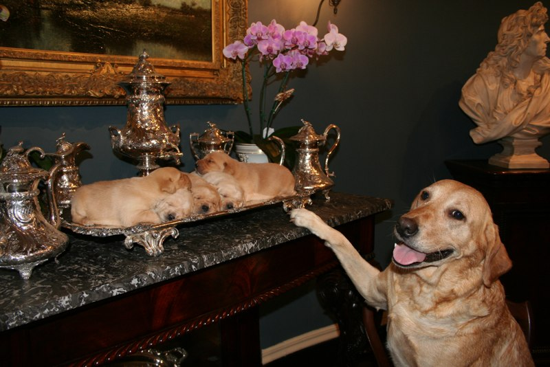 Grace and pups