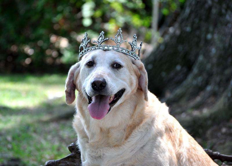 Grace wearing a crown