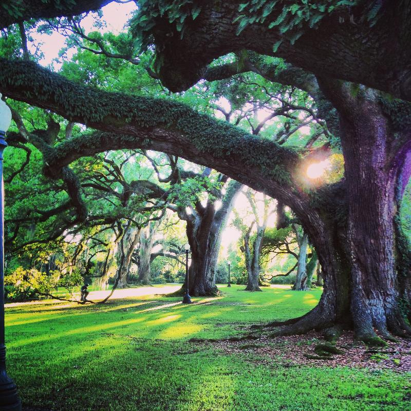 Sun poking through trees