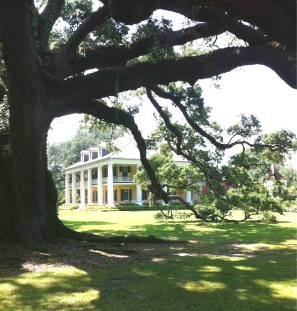 HH under oak tree