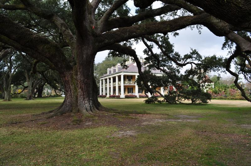 Tree and Mansion