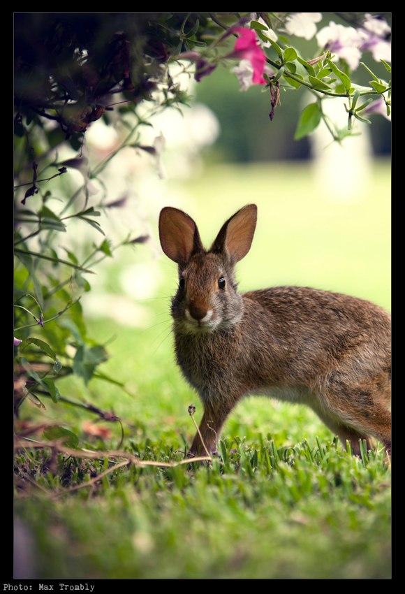 Bunny at Houmas House