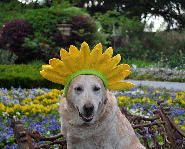 Grace wearing sunflower hat