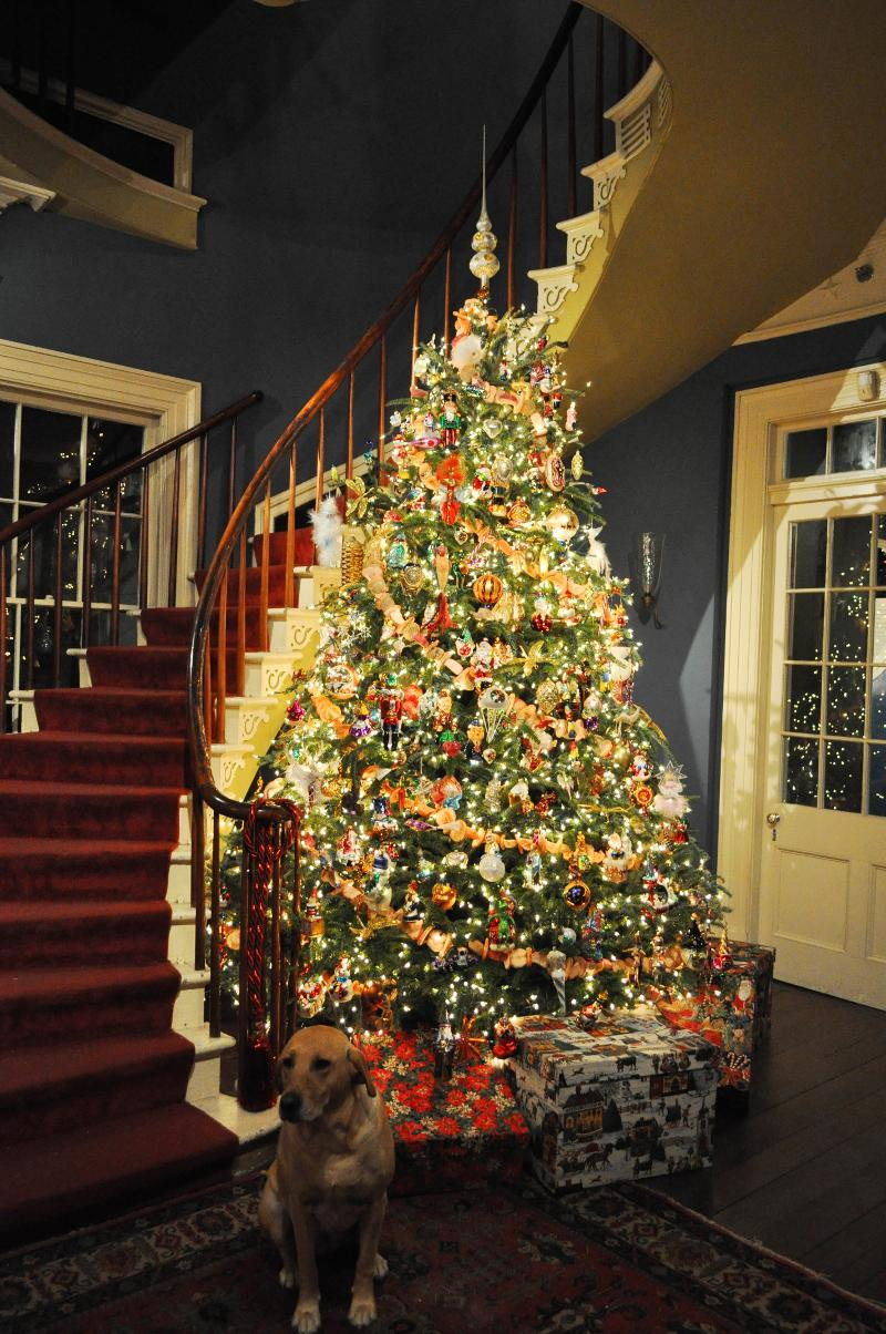 Christmas Tree in Spiral Staircase