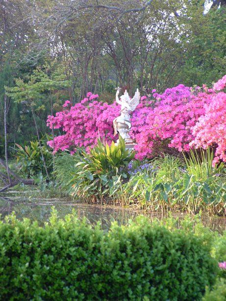 Spring Azaleas at Houmas