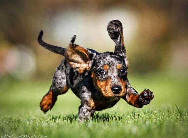running dox