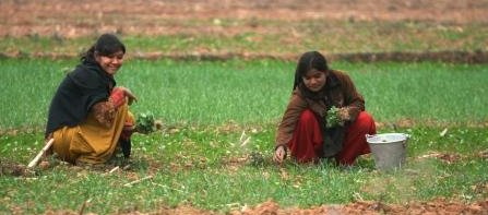 Two girls collecting herbs in a field.