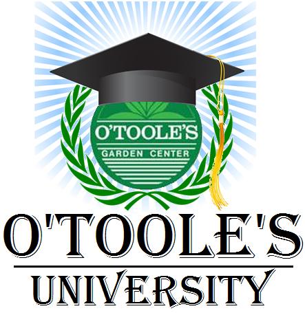 otooles_u