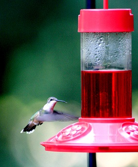 Dr JB Hummingbird Feeder