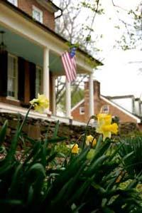 Second Street Daffodils