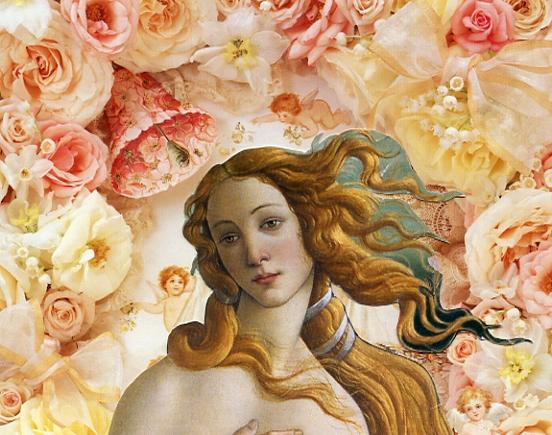 pink roses aphrodites