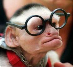 Monkey Trouble 4