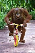 Monkey Trouble 6