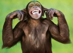 Monkey Trouble 1