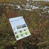 Hegewisch Marsh Natural Area