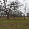 Oak Forest Preserve