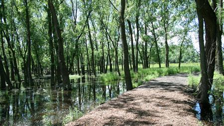 Hegewisch Marsh Restoration