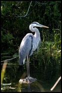 RV Vacation Idea: Florida Everglades