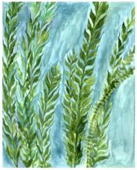 Kelp Forest, an original watercolor painting by Raphaella Vaisseau