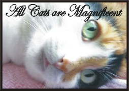 Muffy-All cats are magnificent