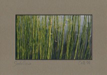 Snake Grass 5x7 photo by Cate