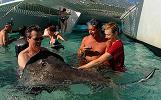 Grand Cayman Stingray