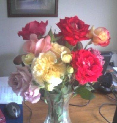 Stasha's Roses