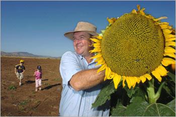 sunflowers this big!