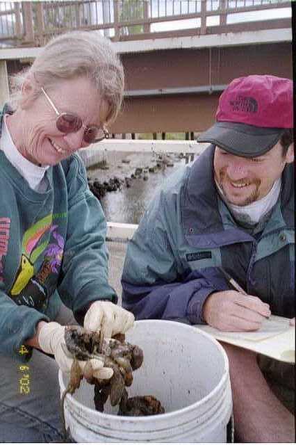 Karen Paulsell examining oyster string