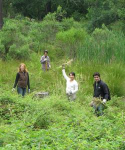 Fern Ravine Weeding