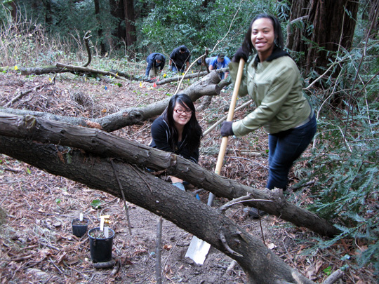 Monterey Redwoods_Hess