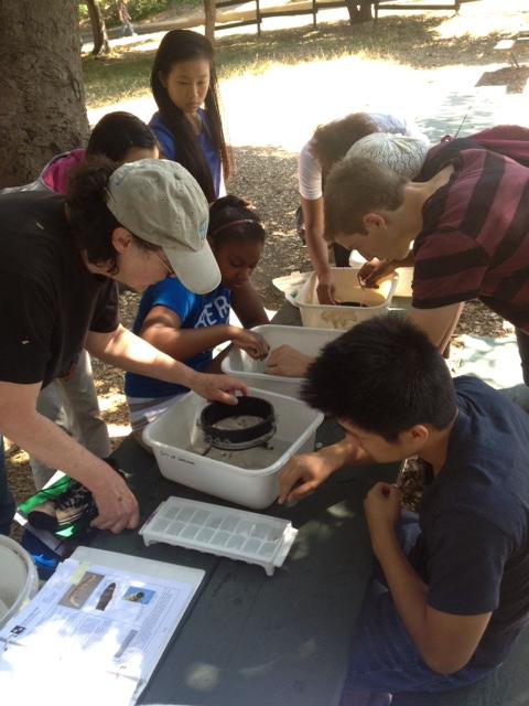 Summer Interns sampling aquatic insects