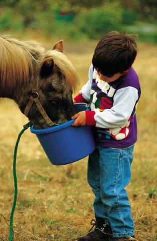 feeding-a-horse