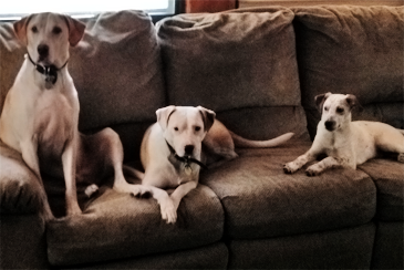Freckles and his foster family