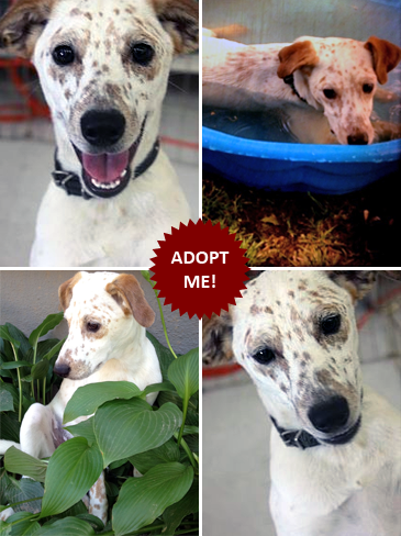 Adopt Freckles!