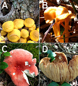 mushroom choices