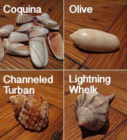 shell answers