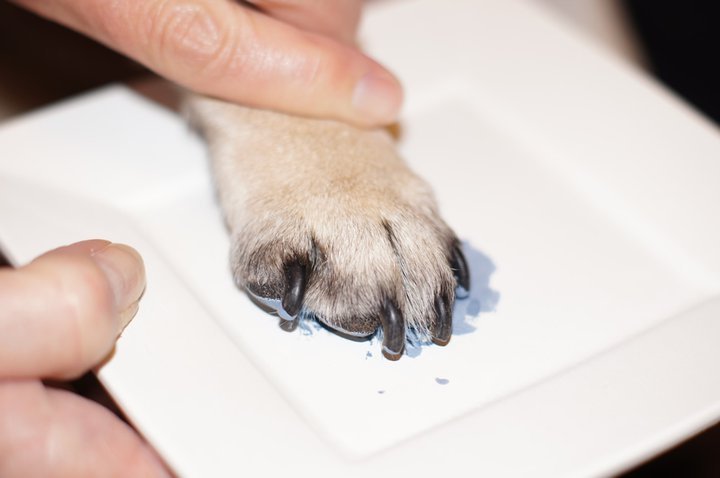 Painting Paw Prints