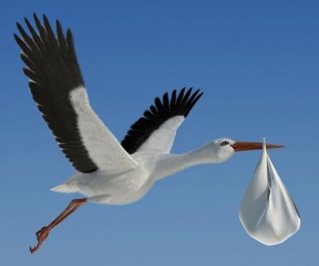Stork Bundle