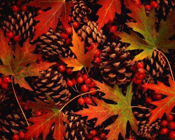 leaves & pinecones
