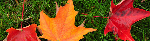 Leaf color change is a phenological event that is easy for citizen scientists to observe.