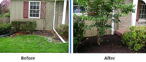 Before and After Drainage Solution
